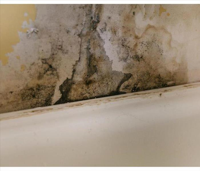 Wall covered with mold due to humidity