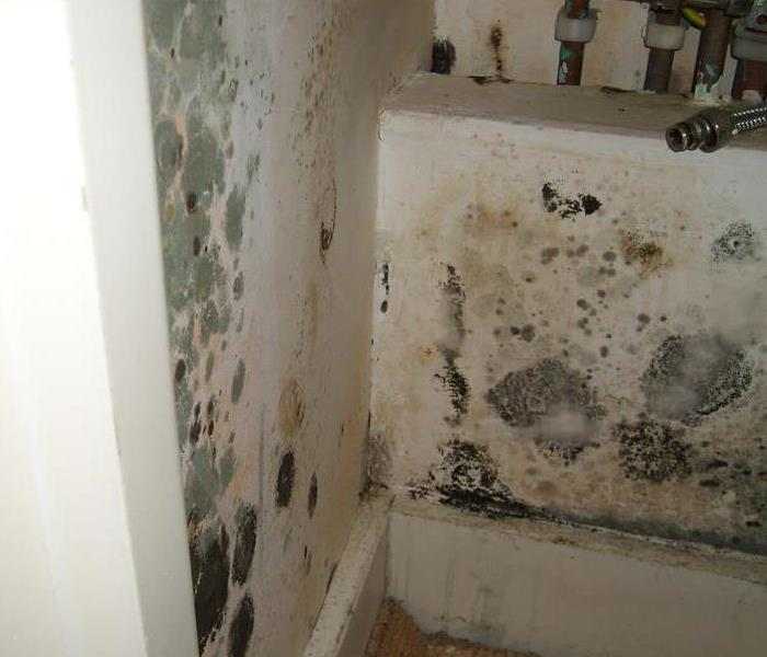 What To Do If You Find Mold Servpro Of Burlington Woburn